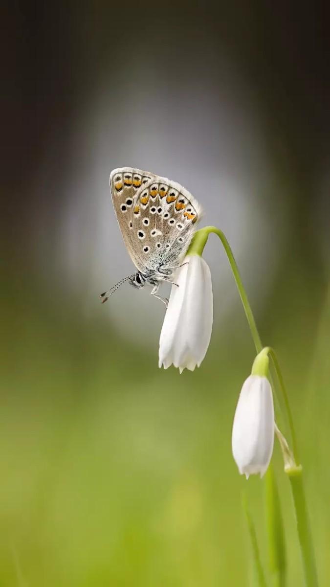 The little butterfly.....